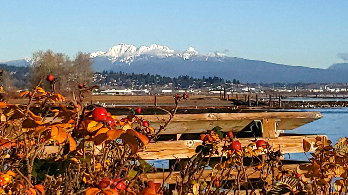 View of Golden Ears from Brunette-Fraser Regional Greenway, New Westminster